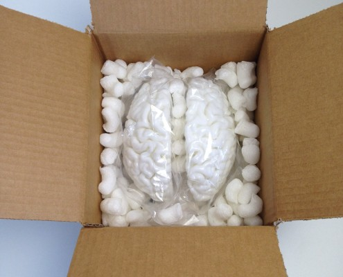 Packed 3D printed brain